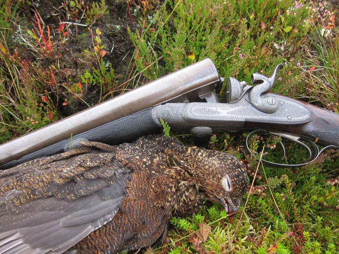Hammering Driven Grouse