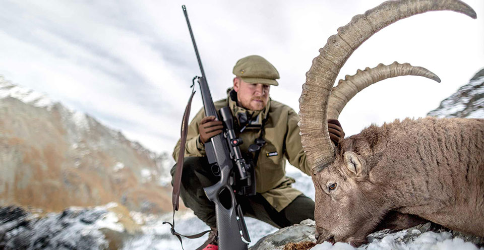 The Alpine Ibex is now stable and sustainably hunted (Fieldsports Journal).