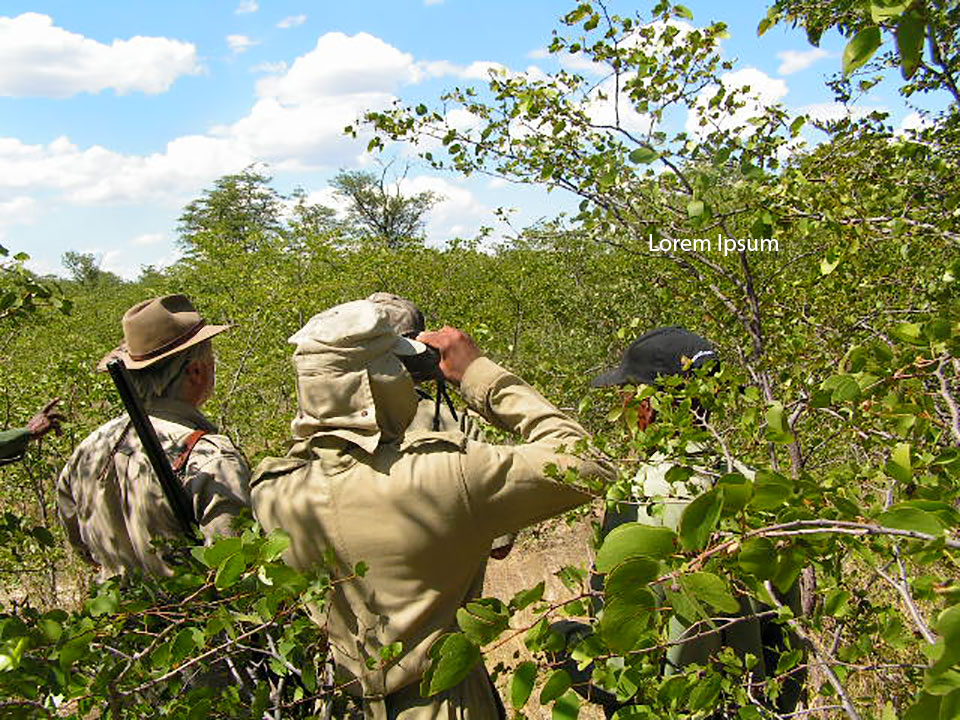 Areas of thick bush left to wild animals only exist because hunting concessions make them valuable to local people.