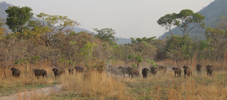 Game reserves in Tanzania with hunting as an income source are the healthiest in the country.