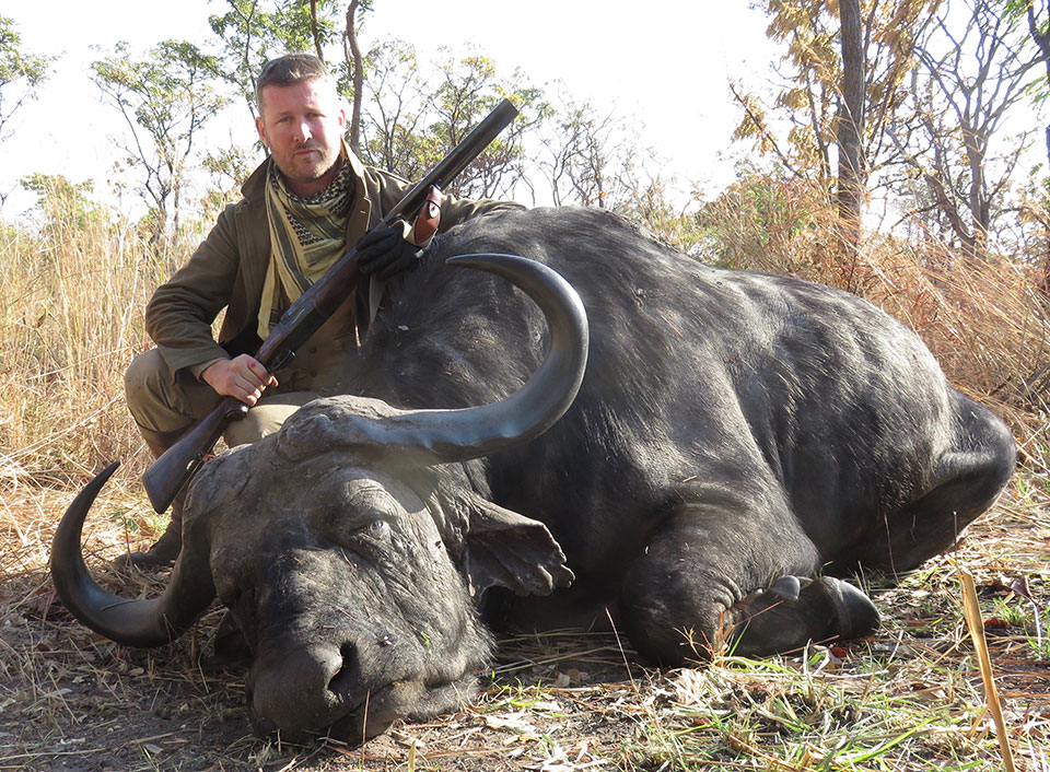 A cape buffalo taken with a .577 'drop-lock' Westley Richards.