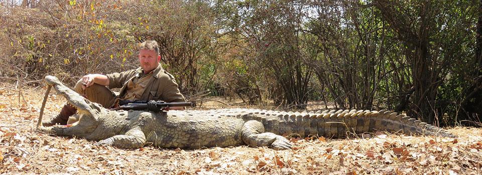 A big Rungwa River crocodile, sucessfully retreived.